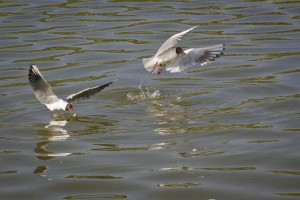 Ptasia wyspa_19